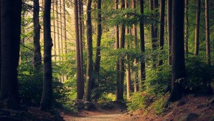 Baños de bosque, los beneficios de pasear por la naturaleza